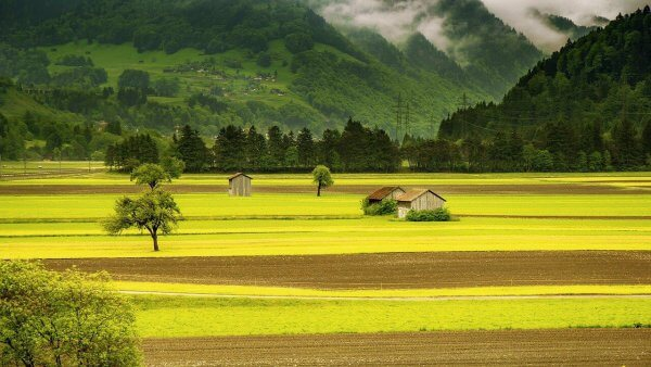 landscape fields
